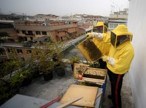 "<div class=""buttonTitle""><div class=""roundedlIcon white mbianco mprest""></div></div>A unique opportunity for research of Rome's urban beehives"