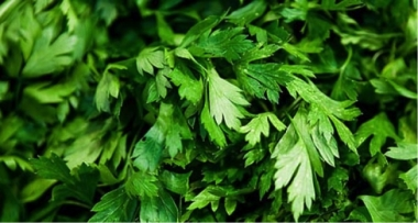 Il Prezzemolo, Parsley