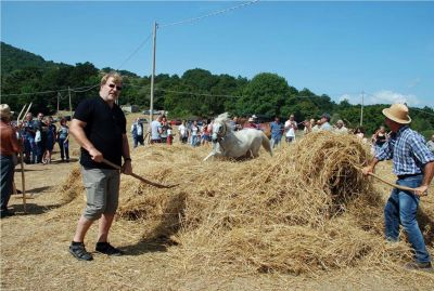 "While on a genealogy research trip to Molise, Roslyn enjoyed ""La Tresca,"" an annual festival in which the ancient way of harvesting grain was demonstrated. A horse runs in circles through a pile of wheat to separate the grain from the shaft. Roslyn's husband, Ron Reese, in the black shirt, is doing his part keeping the wheat in place."
